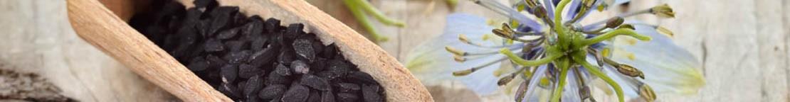 Graines de nigelle